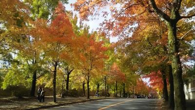 【大阪市内から近場の紅葉スポット】 三色彩道