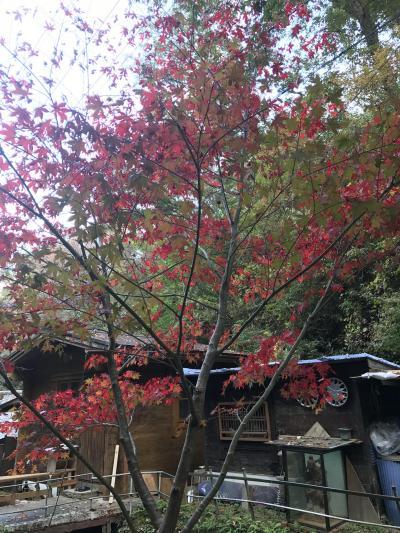 大阪府民の森ほしだ園地に行ってきました