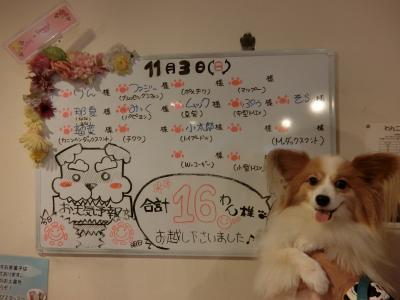④わんちゃん快適宿:下呂温泉わん泊亭_秋の3連休パピヨンみっくの犬旅