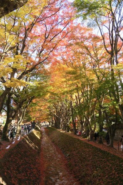 河口湖紅葉の回廊