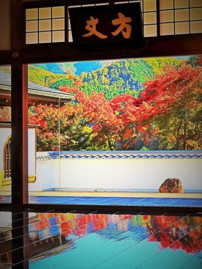 大光山 寳徳寺-2 床もみじ特別公開(紅葉まつり) ☆「リフレクション、床に映る別世界」=大人気