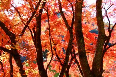 燃えるような紅葉を香嵐渓で