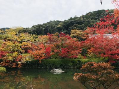 2019京都の紅葉