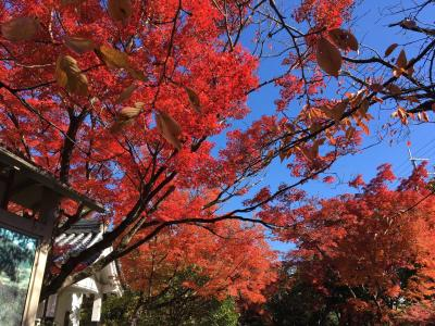 京の週末 モシュ印ふたたび... 妙心寺 桂春院