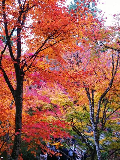 滋賀&京都の紅葉とパワースポット旅