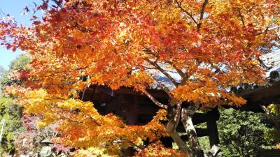 山城国の海住山寺へ紅葉を見に