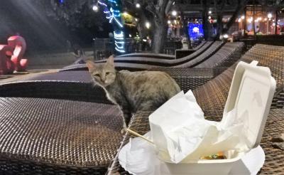2019秋◆微妙な時期に行くタイ・クラビ&バンコク9日間の旅◆Day3アイランドホッピング+猫