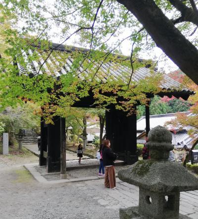 大宰府政庁跡と秋月城跡ドライブ