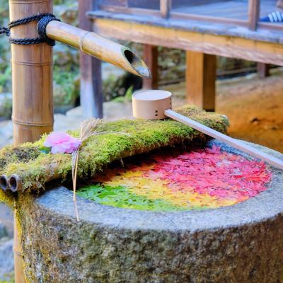 もみじ葉が彩る『なないろ手水』を求めて柳谷観音[楊谷寺]へ
