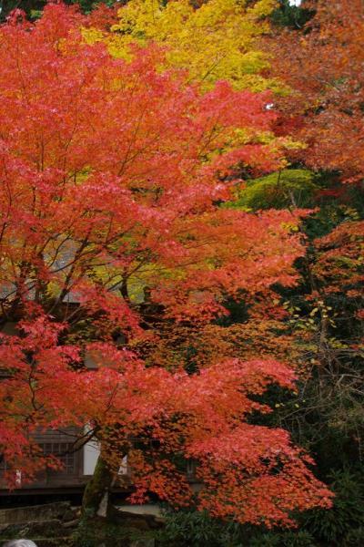 湖東三山の紅葉