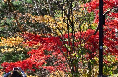 修学旅行生と外国人であふれる日光東照宮の旅 初日 まだまだ見れる紅葉