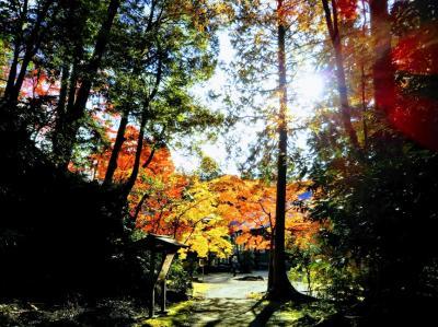 2019秋 京都の高雄・清滝・嵐山をひとり歩き
