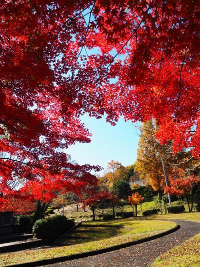 2019.11 秋の紅葉めぐり+α(2)瑞浪市民公園と恵那峡で紅葉狩り