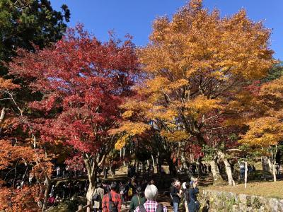 石道寺から鶏足寺の紅葉