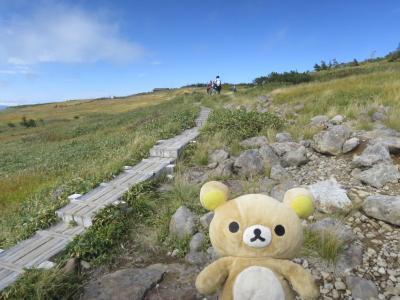 秋の苗場山に和田小屋から登って来るクマ!その2