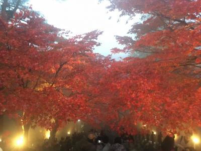 思ったよりハードな大山~日向薬師から見晴台、紅葉の大山阿夫利神社へ