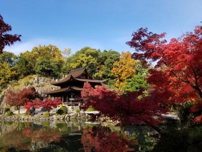 永保寺の紅葉と入星の食事