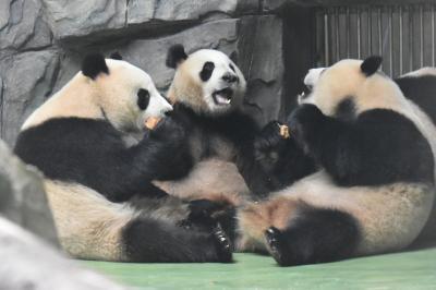 パンダ旅その4