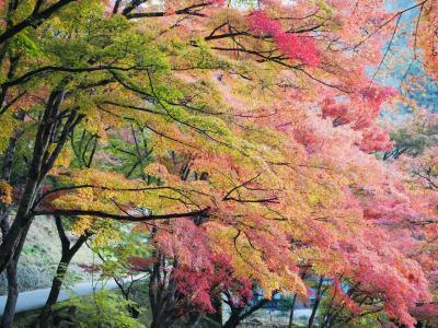 紅葉の香嵐渓と奥三河のナイアガラ 昼は熊骨ラーメン!