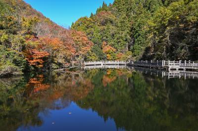 紅葉穴場巡り(滋賀・湖西)
