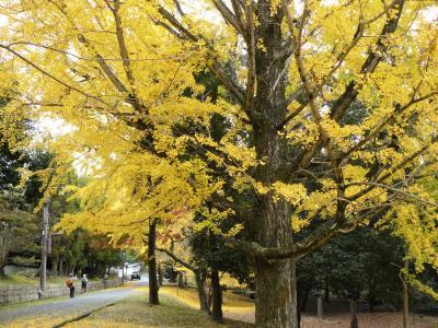 奈良紅葉 3 二月堂から東大寺