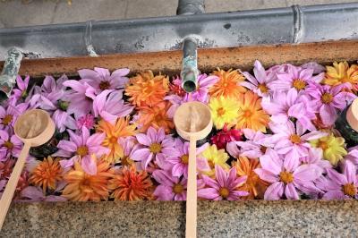 """ちょこっとご近所で""""花手水と紅葉""""「伊和志津神社」"""
