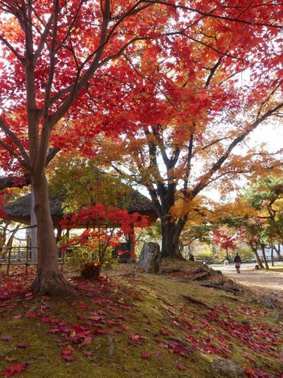 秋の「懐古園」_2019_紅葉は見頃を終わりかけています。(長野県・小諸市)