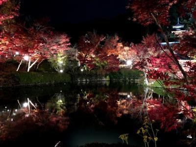 11月末 紅葉の永観堂ライトアップ