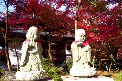 神戸で学会があったので開いた時間に京都に紅葉を見に行ってきました2019.秋