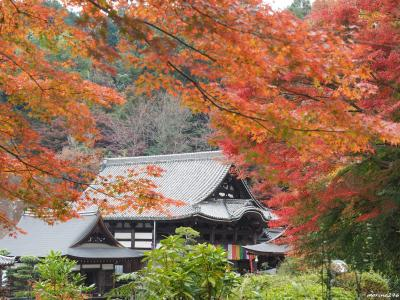 2019秋 関西の紅葉狩り:その2 奈良飛鳥・岡寺~石舞台古墳、久米寺、橿原神宮