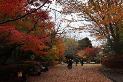 瑞宝寺公園へ 紅葉狩り