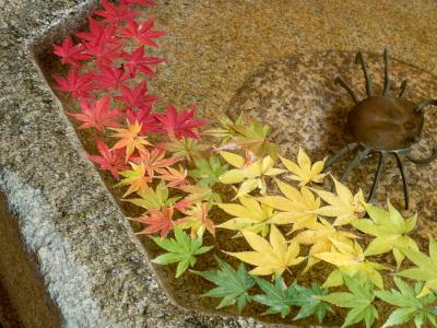 2019 鎌倉の秋Part2  一条恵観山荘 長寿寺