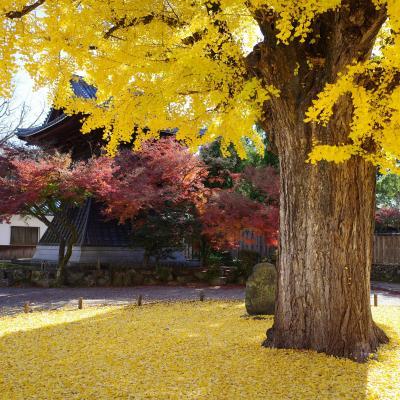 2019年11月 多治見・定光寺で紅葉めぐり