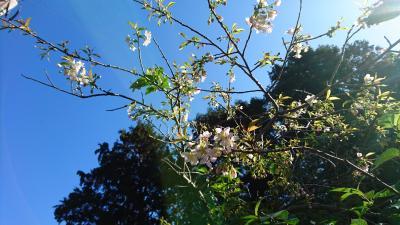 【ちょっとお出掛け】もみじ寺で重要文化財と紅葉と桜。