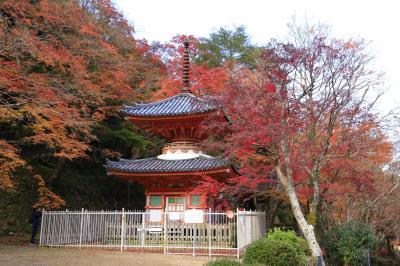 旅するイルカ♪ 大阪府、岸和田 大威徳寺紅葉へ