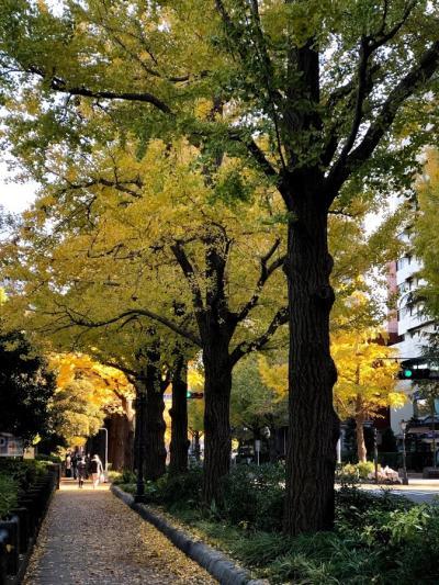 晩秋のヨコハマを歩く