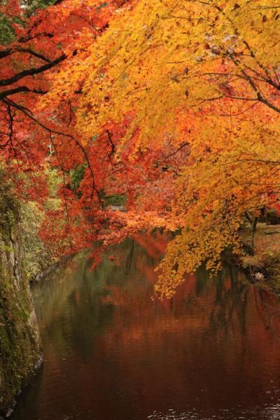 錦秋の紅葉を愛でる♪ 松平郷紅葉と再びの香嵐渓紅葉♪