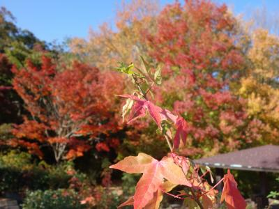 大高緑地で紅葉狩り。開放的ないいところです。