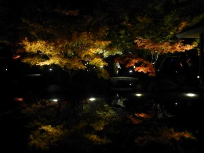 2019年 11月晦日 大田黒公園紅葉ライトアップ
