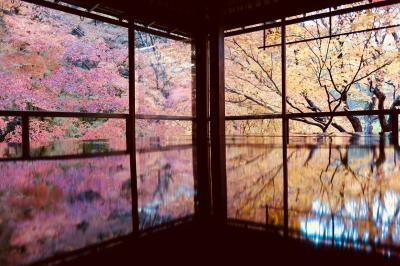 秋の京都*瑠璃光院