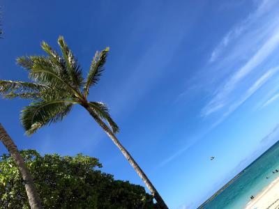 [2019 ハワイ] Leg.5 ホノルルから足を伸ばして東海岸「カイルア」へ・・・