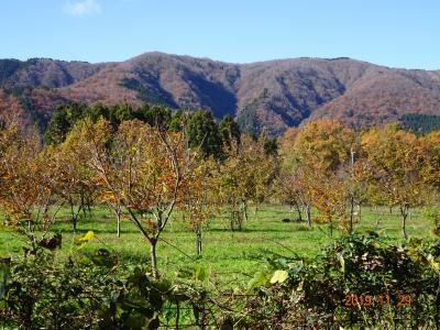 2019秋 滋賀県マキノ メタセコイア並木