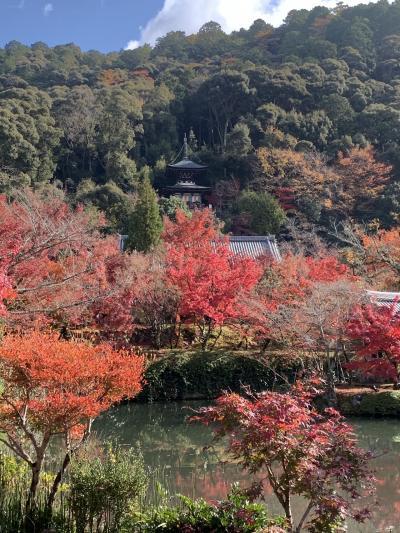 紅葉の京都へ あのおにぎりがどうしても食べたい!