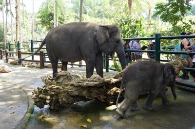 必見!赤ちゃん象に会えた 2019バリ島 ウブド エレファントサファパーク&ロッジ  パーク編day2