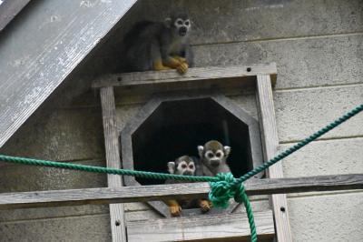 雨の中の大牟田市動物園