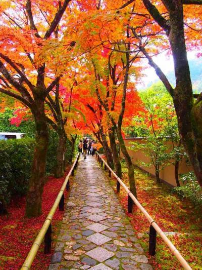 京都の紅葉はやっぱり凄かった。紅葉を求めて鷹峯の源光庵・光悦寺・常照寺を巡る