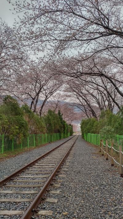 韓国まで愛媛経由で桜を追う18きっぷ旅(その3/昌原・大邱編)