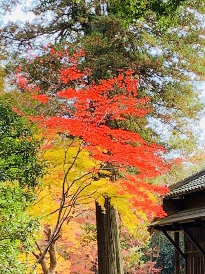 平林寺の紅葉狩り