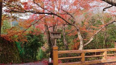 秋爛漫。京都大原三千院~八瀬~錦小路の脈絡のない一人旅。