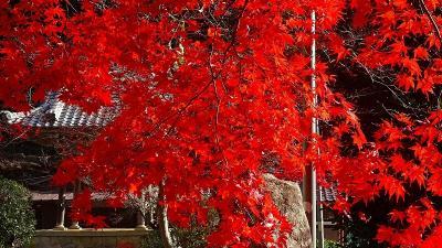 丹波篠山へ紅葉狩りに行きました(2) 洞光寺の紅葉 下巻。